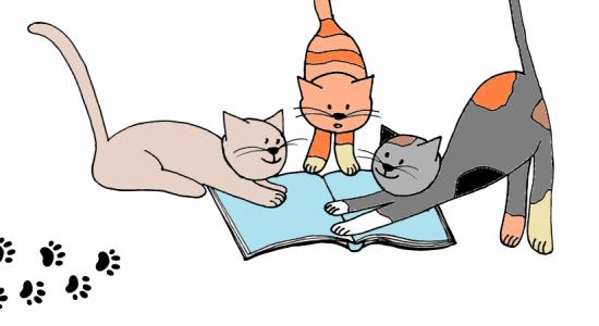 kočky kam se podíváš