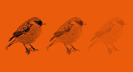Ptáci jako ukazatel změn v ekosystémech
